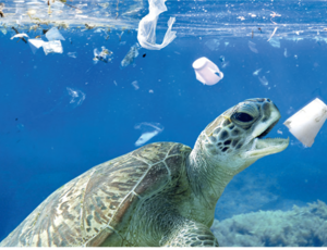 The challenge of plastics in the oceans